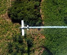 La frontera entre Colombia y Venezuela concentra la mayor superficie de plantaciones de coca