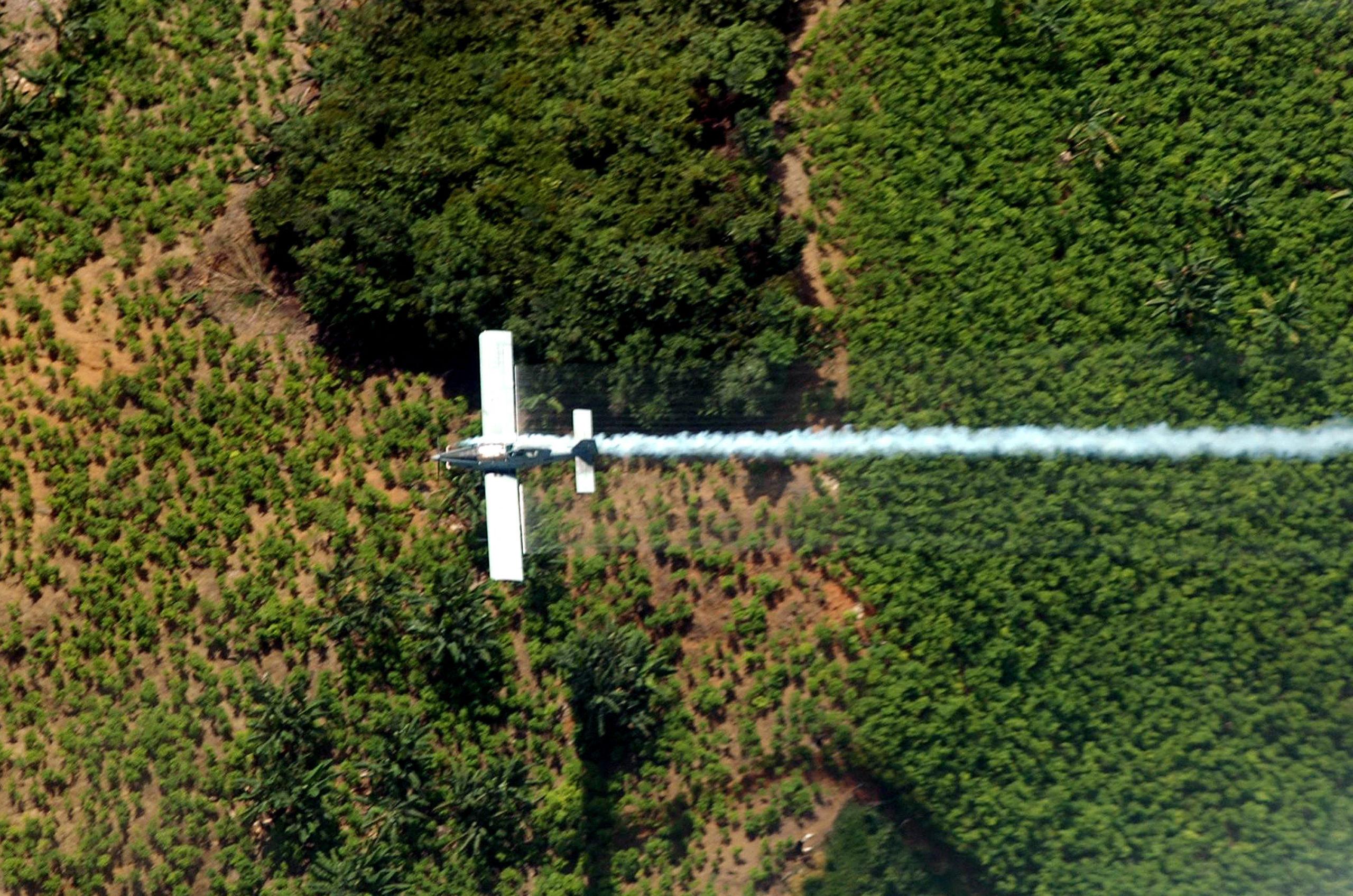 Colombia-Venezuela Border has the Largest Concentration of Coca Crops