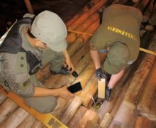 Argentina: Security Forces Seize More than 15 Tons of Marijuana in 3 Days