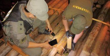 Argentina: forças de segurança apreendem mais de 15 toneladas de maconha em três dias