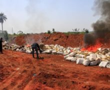 Paraguay Incinerates Record Seizure of 36 Tons of Marijuana