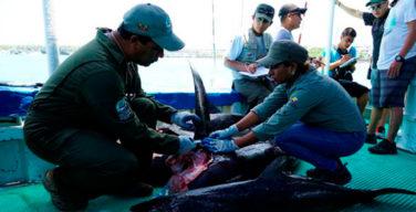 Equador luta contra pesca ilegal com ajuda do Canadá e Estados Unidos