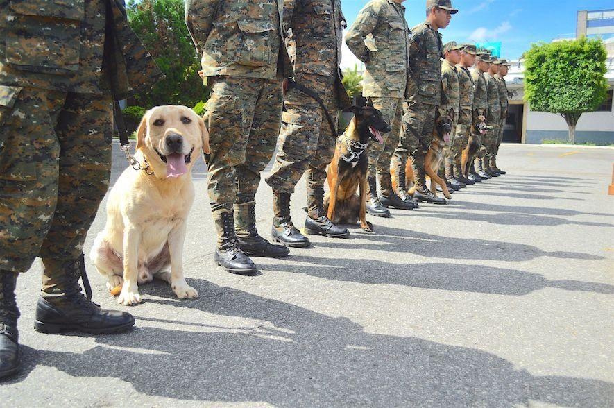 Several breeds of dogs form the ranks of the Canine Unit, including Labradors, Belgian Shepherds, and German Shepherds. Twelve of the dogs were donated by the United States government and the rest by individuals. (Text and photo: Jennyfer Hernández for Diálogo)