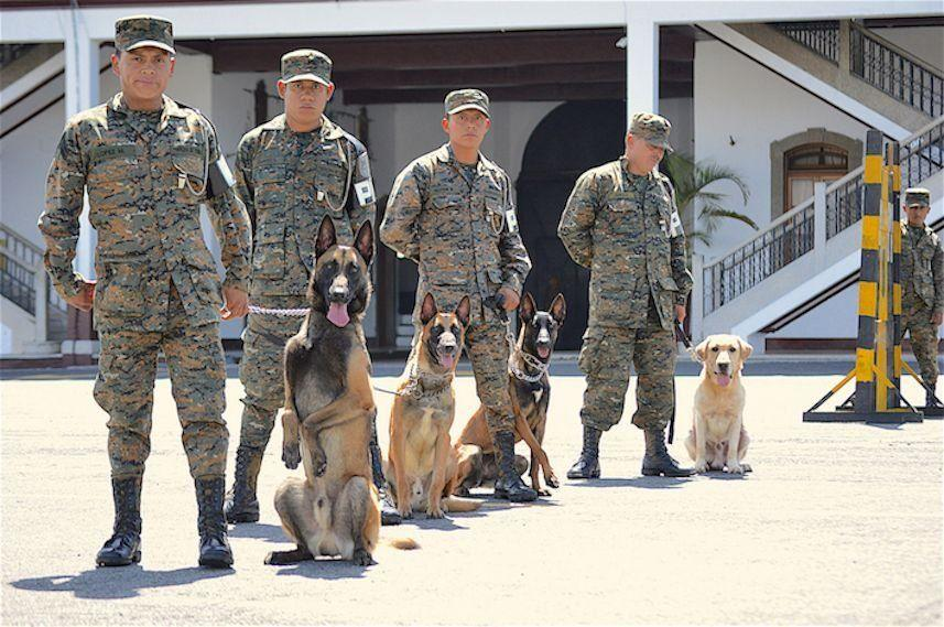 The Military Canine Unit's accomplishments include finding two survivors of the 2010 earthquake in Haiti, helping recover bodies buried in the El Cambray landslide in Guatemala on October 1, 2015, and identifying explosives on public transportation. (Text and photo: Jennyfer Hernández for Diálogo)